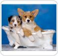 http://www.zootorba.com.ua/category/shampuni-lechebnue-shampuni-kondicionery-balzamy-pudry-parfjumy-dlja-sobak-schenkov-kotit-koshek-gryzunov/