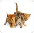 zoomagazin,pitomniki kochek,kupit kotenka,питомник котят